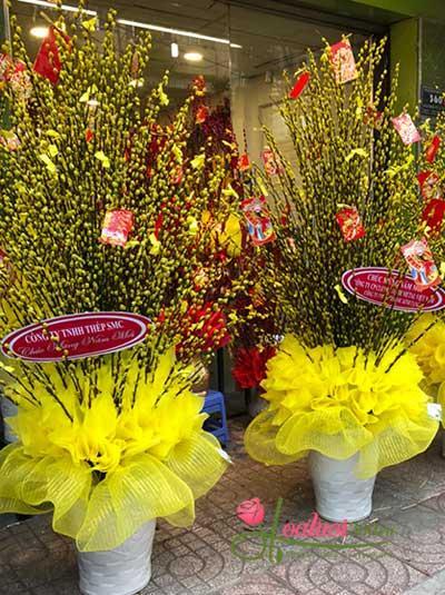 Bình hoa tầm xuân - Sắc vàng đón xuân