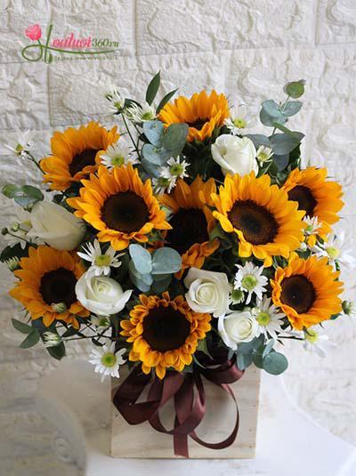 Hộp hoa hướng dương tỏa nắng